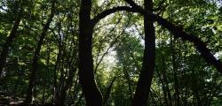 bain forêt